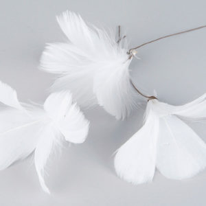 Vita fjäderblommor