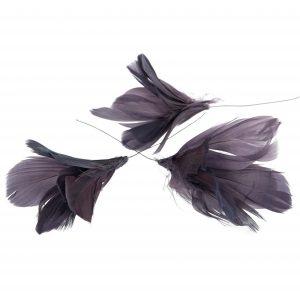 Fjäderblommor lila