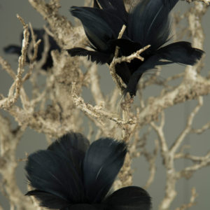 Fjäderblommor svart