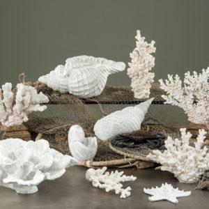 Korall dekoration