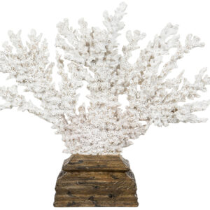 Vit korall på träfot